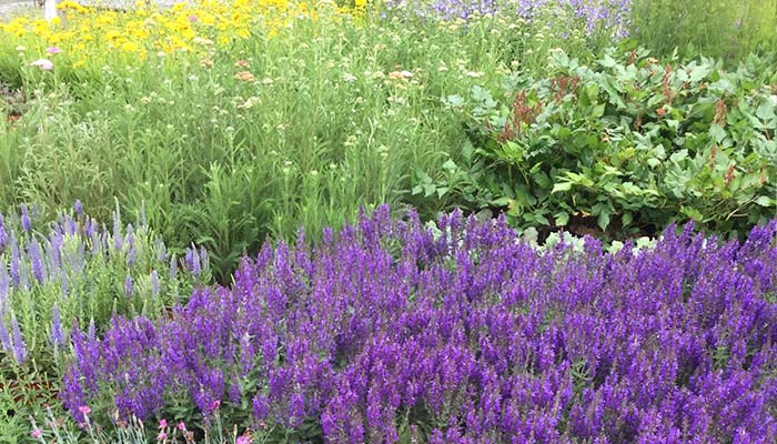 We are the perennial specialists, gowing 1000s of perennials to the wholesale trade